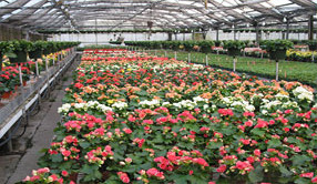 Horticulture by IS Group Services